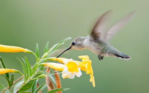 The Nectar Thief