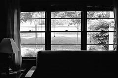 (Cadmeus) Tags: blackandwhite bw slr film window 35mm tmax 14 400 manual 50 nikkormat ft2
