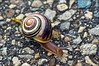 Why Did The Snail Cross The Street...? (Jeannot7) Tags: road pavement snail 8 anawesomeshot