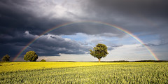 probably my last landscape photo (Mace2000) Tags: trees storm field rain weather clouds germany landscape deutschland rainbow feld wolken 5d regenbogen wetter mace2000 stupferich 20090609mg4990