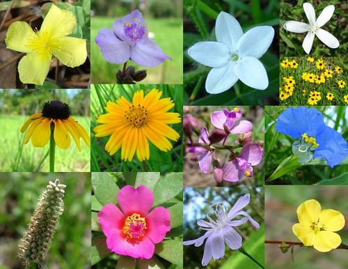 Wildflowers in Pasture