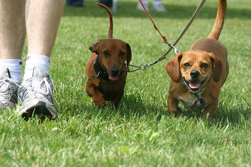 West Chester Dogfest