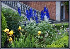 Hatfield House - East Gardens Steps (lintonolive) Tags: door flowers hatfieldhouse irises eastgardens stonestaircase larkspurs