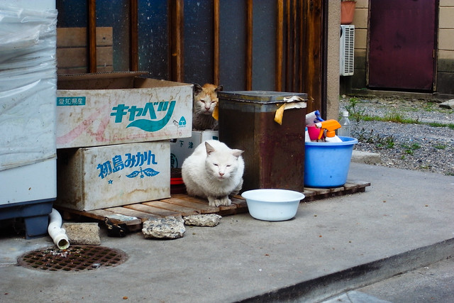 Today's Cat@2011-05-20