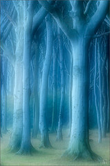 spooky forest (Sandra Bartocha) Tags: trees nature forest spooky wald mv mecklenburg mecklenburgvorpommern beeches hauntedforest gespensterwald mecklenburgwesternpommerania csandrabartocha wwwbartochaphotographycom gespensterwaldnienhagen