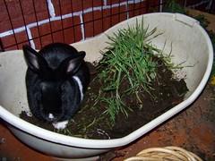 Bunny posing