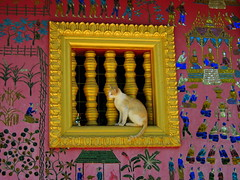 Luang Prabang (Py All) Tags: heritage window cat temple chat asia unesco laos fentre luangprabang luang worldheritage prabang