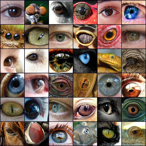 eyes by robynejay, on Flickr
