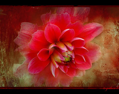 ~ the flower ~ (together8) Tags: flower color texture love spirit soe blueribbonwinner imagepoetry outstandingshots specialtouch innamoramento nikond40 visiongroup memoriesbook multimegashot multimegastar obq simplythebest~flowers oraclex mandalalight goldenart artofimages novavitanewlife together8 sensationalphoto thedantecircle artistictreasurechest themonalisasmile imagesforthelittleprince flowerquest worldsartgallery weirenasfaves