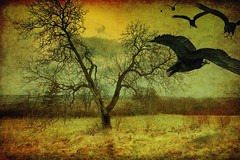 The raven (George Goodnight) Tags: orange sun black tree texture yellow nikon raven ooops edgarallanpoe theraven adreamwithinadream alanparsonsproject mywinners abigfave omot nikond40 artistictreasurechest pareeericatexture