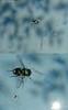 des/ahogos inciertos. (Felipe Smides) Tags: chile insectos art water pool animal animals dead agua arte natural piscina muerte sueños vida nadar alas dreams animales pena felicidad bichos lucha felipe mosca olvido moscas letra alegría ahogo volar fuerza pasión soñar líquido daño artisticexpression incertidumbre desahogo instantfave mywinners abigfave perseverancia aplusphoto beatifulcapture artlegacy smides fotografiasmides funfanphotos felipesmides ángelopierattini