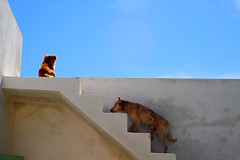 rendez-vous on the terrace (luca.gargano) Tags: africa travel dogs stairs steps morocco maroc gargano lucagargano