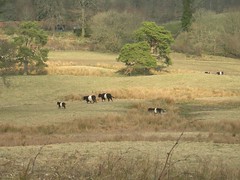 field_of_belties