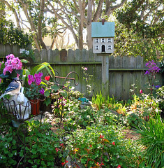 GARDEN- (linda yvonne) Tags: garden birdhouse bluejay begonia carmel cyclamen cottagegarden supershot i500 interestingness158 platinumphoto