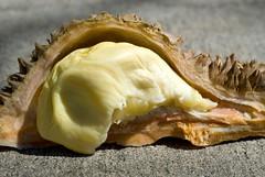 durian maggot