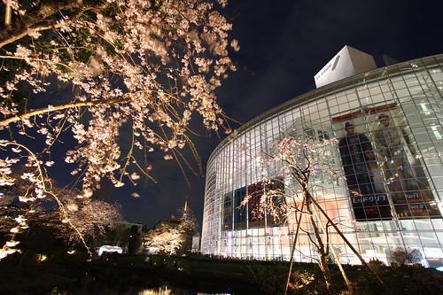Sakura - Night shot of RoppongiHills, 04