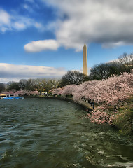 Cherry Blossoms on a Windy Day (` Toshio ') Tags: pink flowers sky people flower tree water clouds cherry washingtondc dc washington petals spring districtofcolumbia waves branch artistic wind branches blossoms perspective rail windy wideangle tourists cherryblossoms ripples washingtonmonument hdr sidwalk tidalbasin cherryblossomfestival toshio highdynamicresolution platinumheartaward