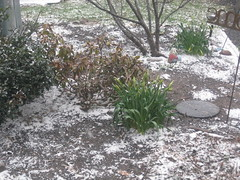 snow?!
