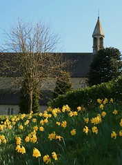 Heads Bowed (Chris*Bolton) Tags: flowers church landscape evening spring daffodills soe blueribbonwinner supershot rathdrum bej golddragon abigfave platinumphoto anawesomeshot diamondclassphotographer citrit theunforgettablepictures theperfectphotographer goldstaraward