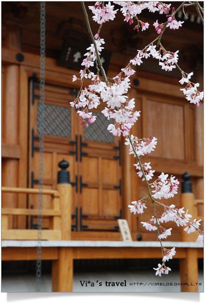 【京都春櫻旅】京都旅遊景點必訪~京都清水寺之美京都清水寺17