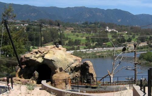 Condors 1 Santa Barbara Zoo