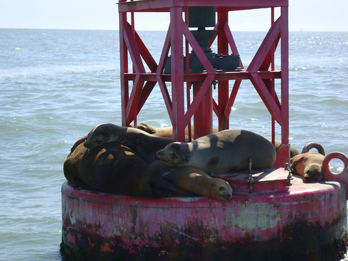 Sea lions on a buoy, Santa Barbara, CA.