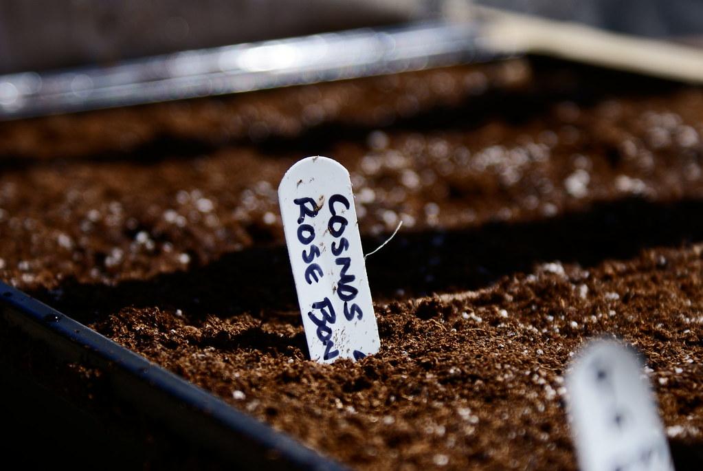 149/365 - Planting Season