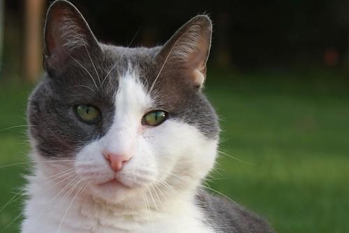 leo green eyes