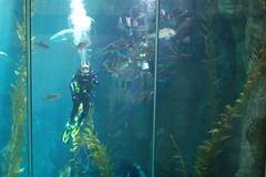 Masked diver