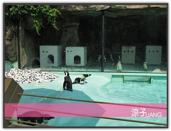 愛寶樂園(動物篇)02