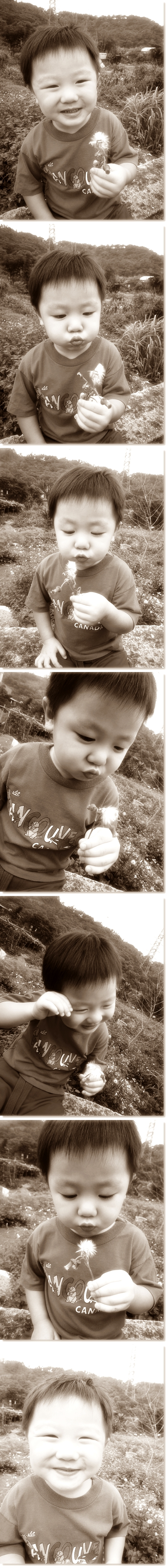 Chandler with dandelion