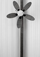 Flower Fan 201/365