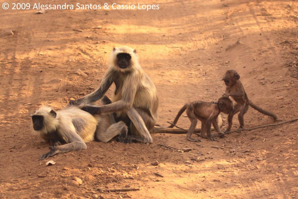 Langur Family _MG_2770_F
