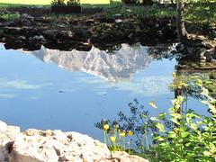 (arjay9) Tags: flowers wild canada mountains reflection rockies rocky alberta banffnationalpark