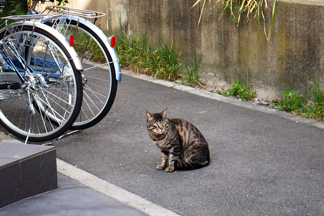 Today's Cat@2011-05-25