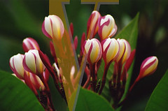 kauai28 (vitaphotography) Tags: hawaii us tropical hanalei