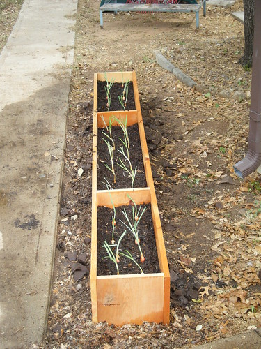 Onion Row Raised Bed