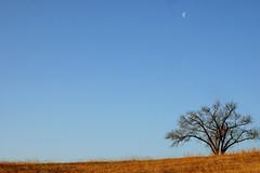 Morning Moon (shuttermeister) Tags: moon field pond nikon nikond70 missouri goldstaraward