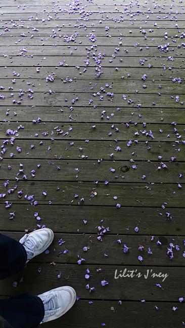 20090328_散落一地的花瓣