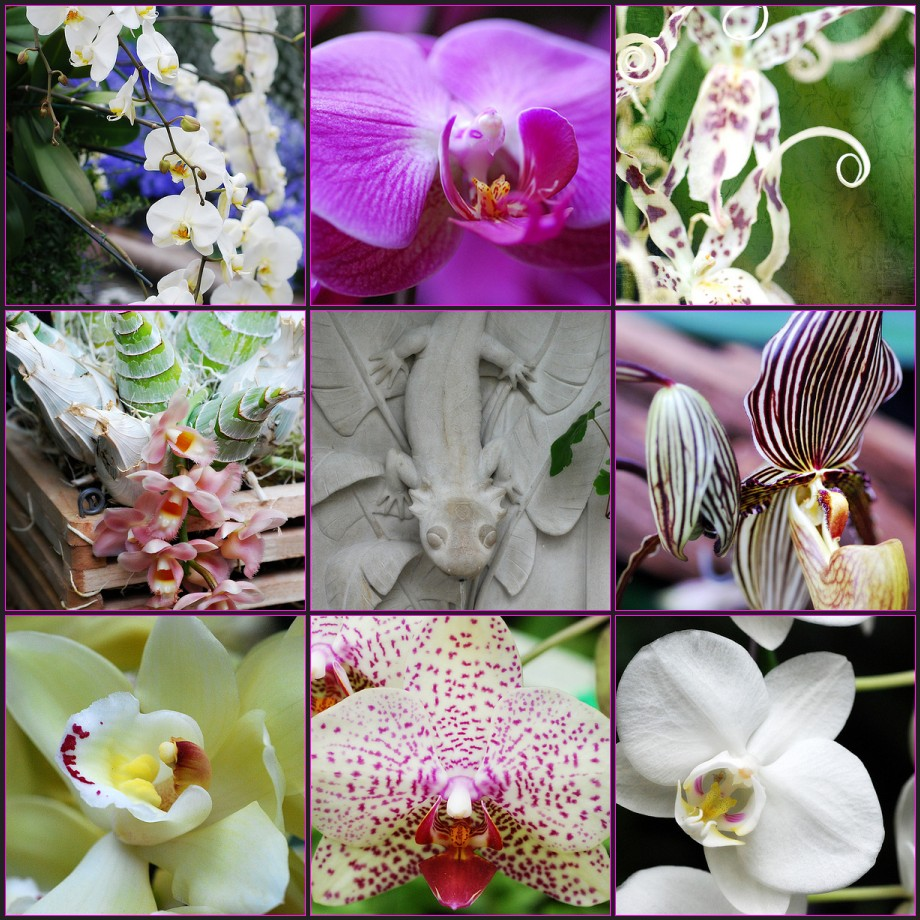 Orchid mosaic