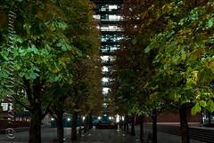 Exchange Trees (Bluwing11) Tags: bridge autumn light colour london eye tower architecture night dark square neon symmetry broadgate shape exchange embankment lloyds