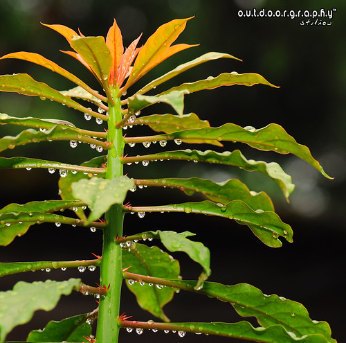 Outdoorgraphy™ : Droplets droplets