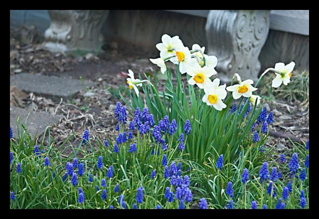 flowers_640