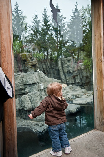 Central_Park_Zoo-8