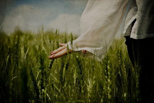 http://farm4.static.flickr.com/3646/3461959398_538684412a.jpg