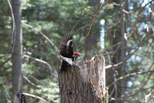 Woodpecker Launch