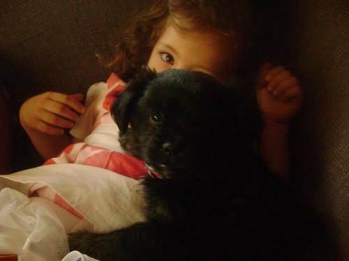 abbie puppy 001