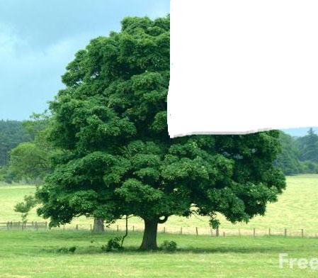 tree_edited-1.jpg