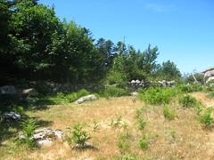Muret au col 1240 au-dessus d'Apaseu (proche IGN 1225)