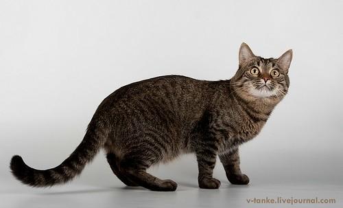 Всем поклонникам кота Пиндыка посвящается :) Pindo & Co